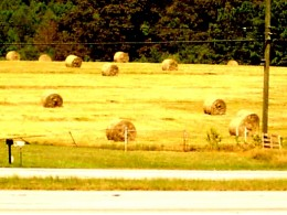 We should be having hay in fields, but the drought  is hurting Oklahoma, and endangering horses and other animals.