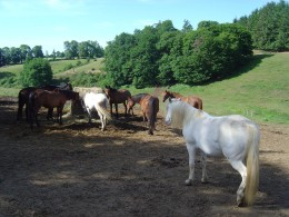 Hosres at the riding stables, Pressignac