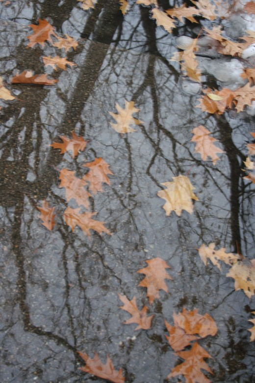 canopy of leaves reflected in water