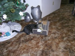 this was on Christmas, he found his present  under the tree.