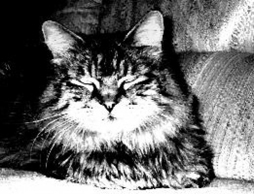 "This is ""Gertrude"" the Maine Coon Cat in the Legacy of the Skull Master by SM Rodgers. All Right Reserved under Legacy of the Skull Master."