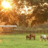 Work And Leisure In Ocala, A Horse Community