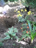 Shade Gardening In Rocky Soil