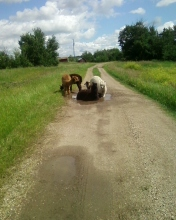 It's so hot...all we want is a puddle! (Our herd after one of their many Houdini acts.)