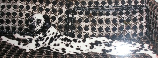 Elvis as a puppy on his favorite couch.
