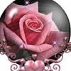 kimrose13 profile image