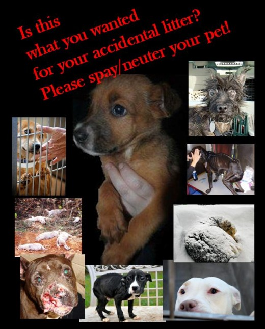Spay/Neuter poster made by me!