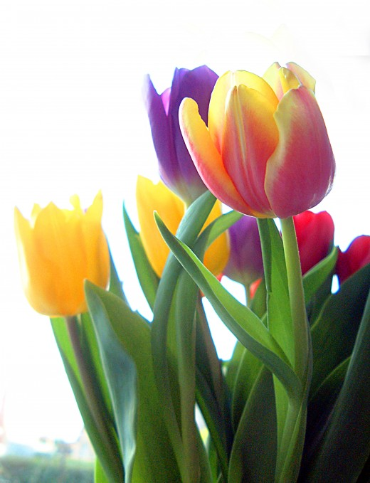 Bulb flowers such as tulips and and narcissus can be deadheaded.