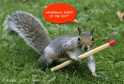 Squirrels are to blame for about 30,000 house fires each year