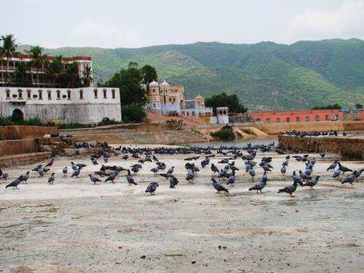 Pigeons on a ghat