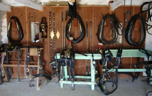 Equipment: The harnesses that the Shire horses wear hanging in the tack room