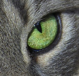 Cats are symbols of intuition.