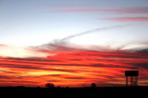 Australian outback at dawn.