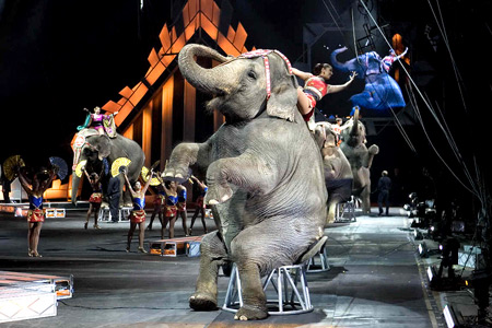 The Ringling Bros. & Barnum and Bailey Circus