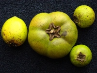 Black sapote whole