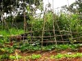 Permaculture Boosted by Carbon Sequestration and Carbon Farming Initiatives