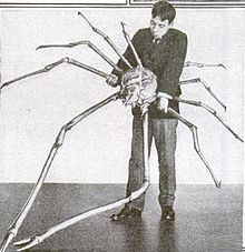 To get an idea of the size of a spider crab