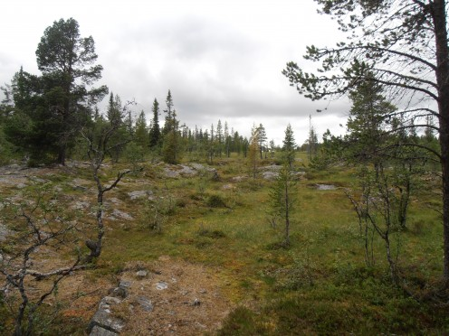 Open space in the swedish forest