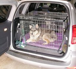 Keep your dog safe in car cages or crates during the ride.