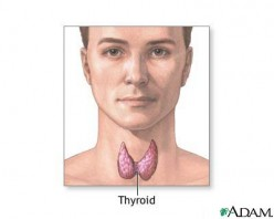 How to cope with Thyroid disease in men