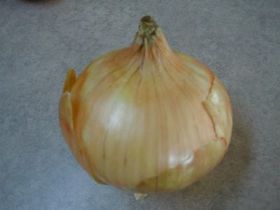 The popular Yellow Onion variety