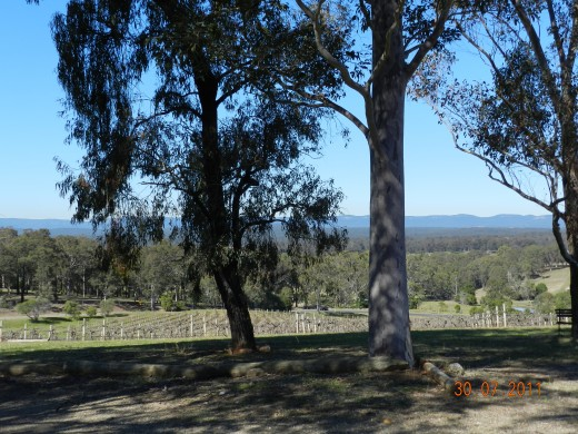 Gum trees and grape vines
