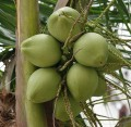 Coconut water Nutrition and Health Benefits