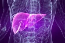 The human liver