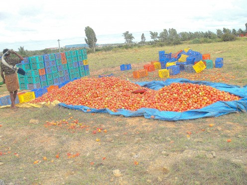 LORRY LOADS OF TOMATO'S..
