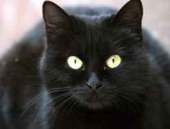 Why Black Cats are Halloween Symbols