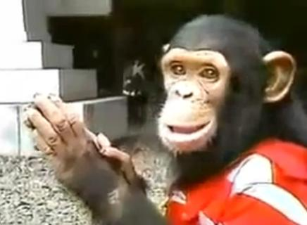 Bubbles the Chimp