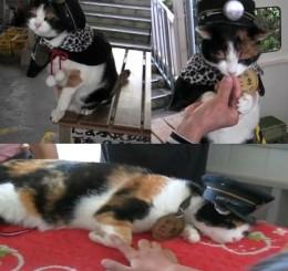 Tabby Tama - Super Station Master Cat