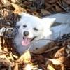 Codiebear profile image