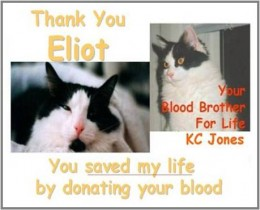 Eliot and KC now Blood Brothers for Life