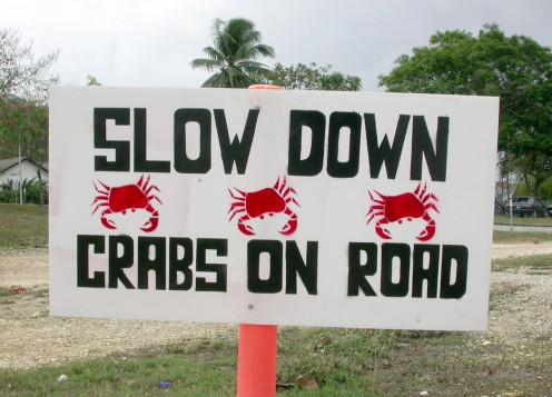 Islanders put up signs to warn for and protect the crabs