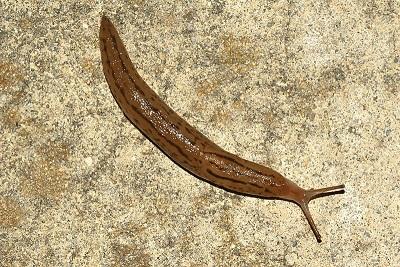 Photo of a Slug