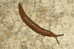 How to Get Rid of Slugs in the Garden