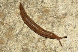 Photo of a Slug