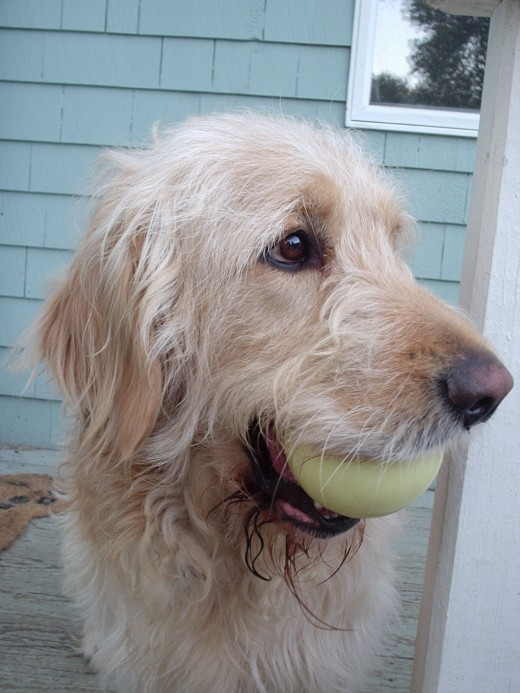Hi, I am Ryley.  I am a handsome and outstanding ball catcher!  I will play ball with you morning, noon and night!