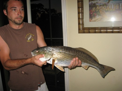 Redfish caught from the dock.