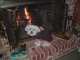 Gizmo--trying to get warm in a 40 degree house