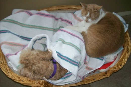 Buttons & Punkin Sharing A Basket