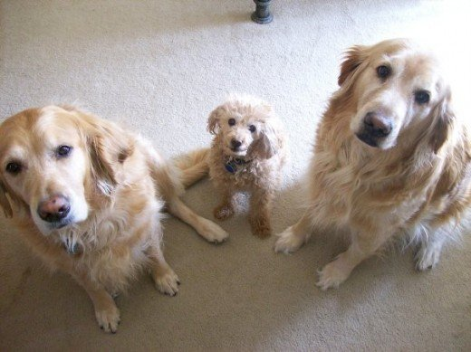 SnowBear, Buttons & Betsy Posing So Nicely . . .
