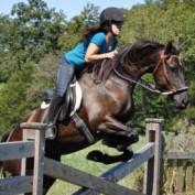 equine profile image