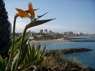 Bird of Paradise flowers on the Paradise Island of Tenerife