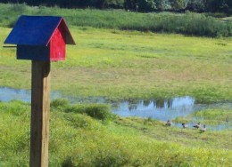 We spotted some birds (geese) as we walked along the Red Winged Blackbird Trail.