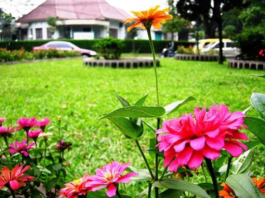 Bandung the Flower City