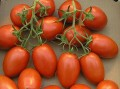 Tuscan Salad--sweet ripe tomatoes paired with Italian beans, cheese, and herbs for a satisfying main dish salad