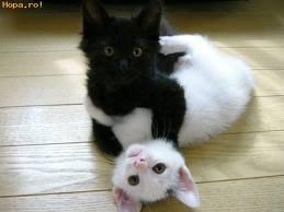 Friend's kitties...