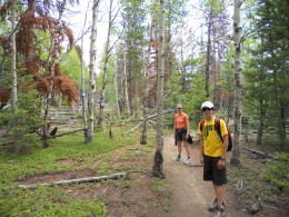 Aspen Grove on Deer Mountain Trail